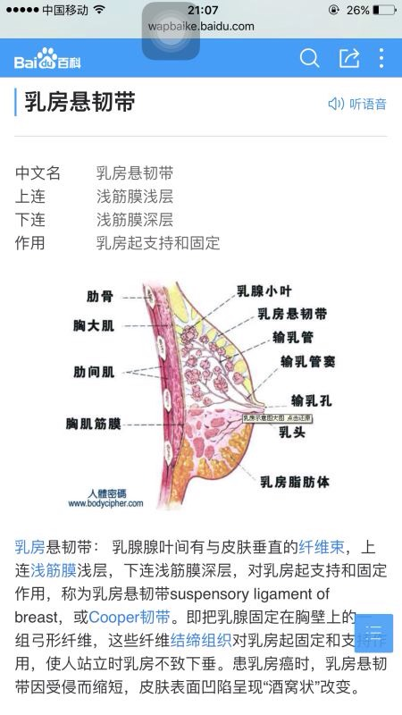 是因为悬韧带断裂,胸大肌不饱满,乳房上部分比较空,胸部本身已经没有=>鼠标右键点击图片另存为